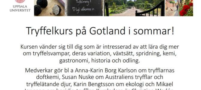 Tryffelkurs på Gotland i sommar!